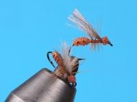 Flashrib Flying Ant