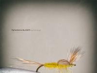 Ephemerella Aurivilli Flymfe