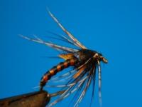 Hatching Duckfly