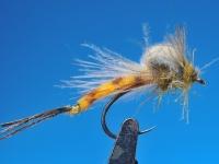 Aurivilli klekker