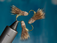 Striking Caddis