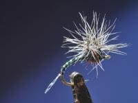 Paraloop mygg klekker