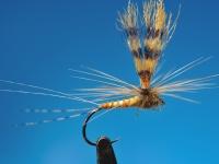 Biots parachute Aurivilli